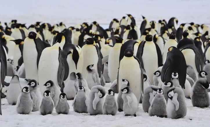 Bongkahan Es Terbesar di Dunia Bakal Menabrak Kawanan Penguin di Antarktika